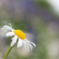 Växter (4/13)